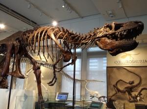 Daspletosaurus torosus